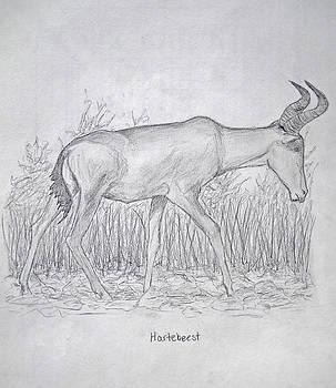 Hartebeest by Julia Raddatz