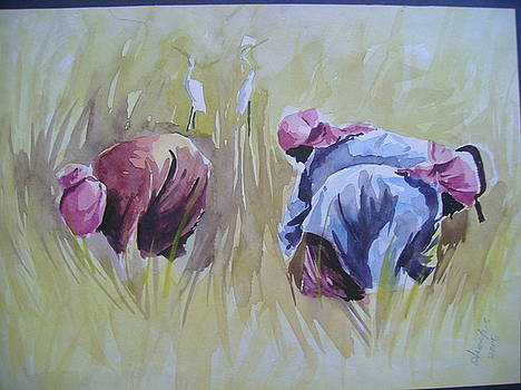 Harvest by Anoop S