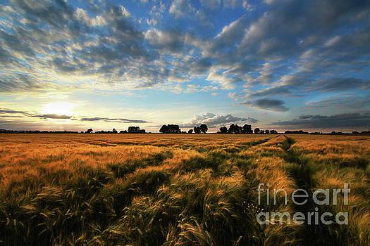 Harvest by Franziskus Pfleghart
