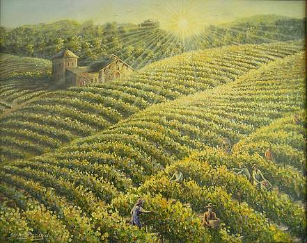 Harvest in wine country by Steven Finnegan