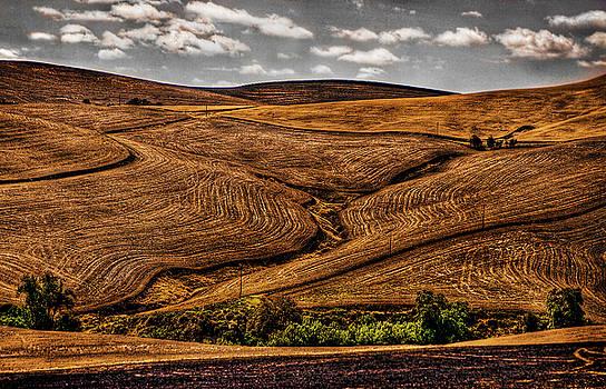 Harvest by Ken Ketchum
