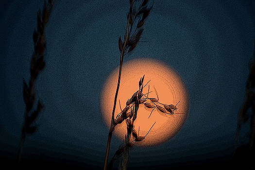 Harvest Moon by Anne Mott