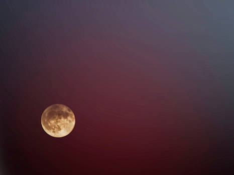 Harvest moon by Frances Lewis
