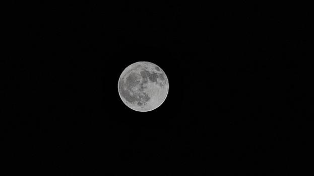 Harvest Moon by Philip A Swiderski Jr