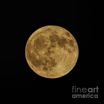 Harvest Moon by Robert Loe