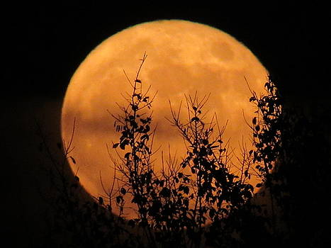 Harvest Moon by Ron Enderland