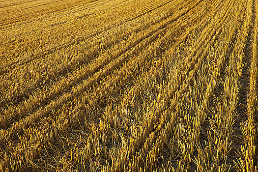 Harvest patterns by Mike Santis