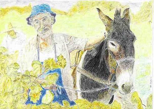 Harvest by Sal Lomick