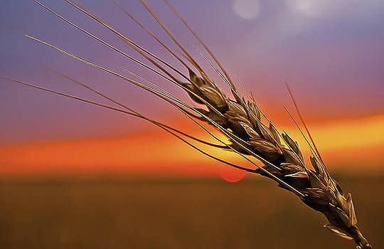 Harvest Sunset by Garett Gabriel