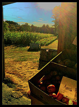 Harvest Time by Cathy Peterson