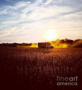 Harvest Time by Waverley Manson
