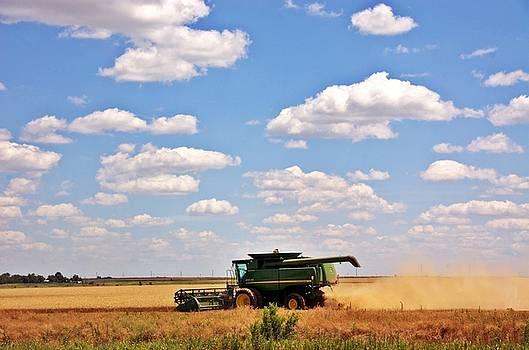 Harvest Views by Anita Hohl