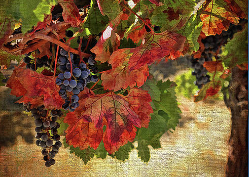 Harvest Wine Vineyard with Fall Colors Textured Tuscan Art by Stephanie Laird