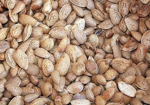 Tracey Harrington-Simpson - Harvested Almonds