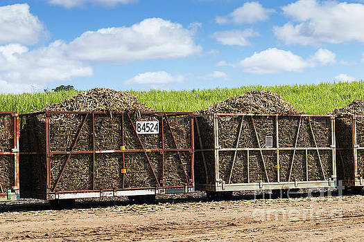 Harvested Sugar Cane Train Ready For Crushing by Carl Chapman