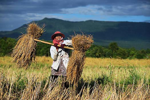 Harvesting Bundles of Rice by Lee Craker