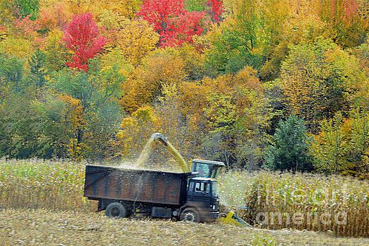 Harvesting Corn in Vermont by Catherine Sherman