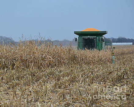 Harvesting Corn by Kathy M Krause