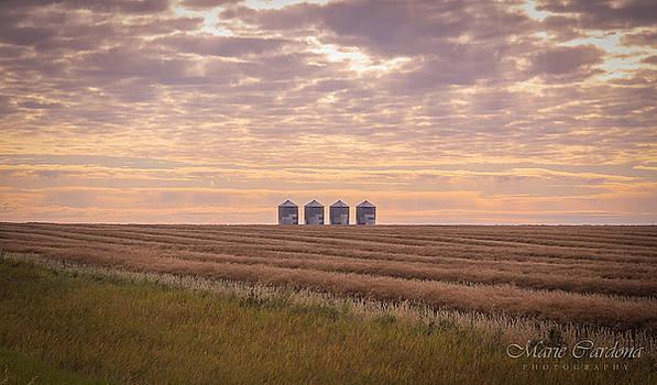 Harvesting Dawn by Marie  Cardona