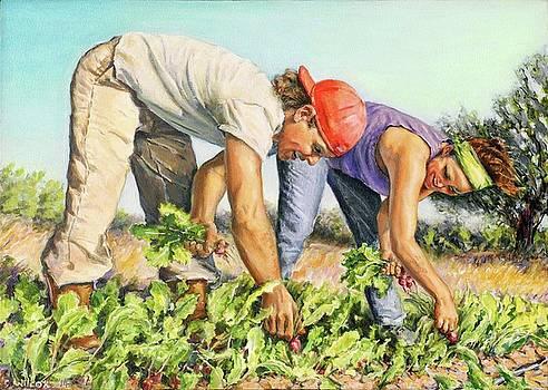 Harvesting radishes by Steve Wilcox