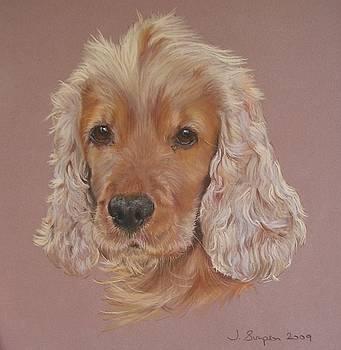 Harvey by Joanne Simpson