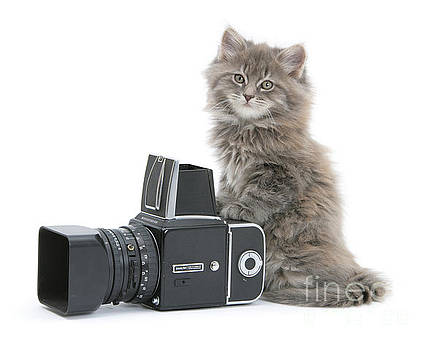Hassle with the Hasselblad by Warren Photographic