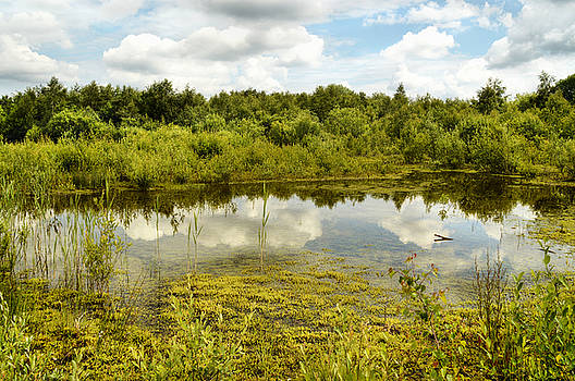 Hatfield Moors by Sarah Couzens