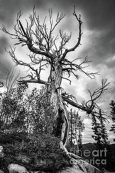 Haunted Old Tree in the Forest - Halloween by Gary Whitton