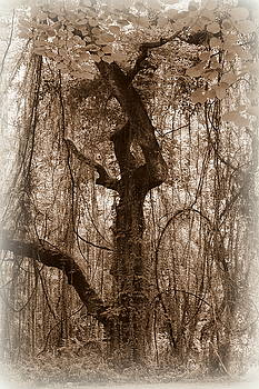 Haunting by Beth Vincent