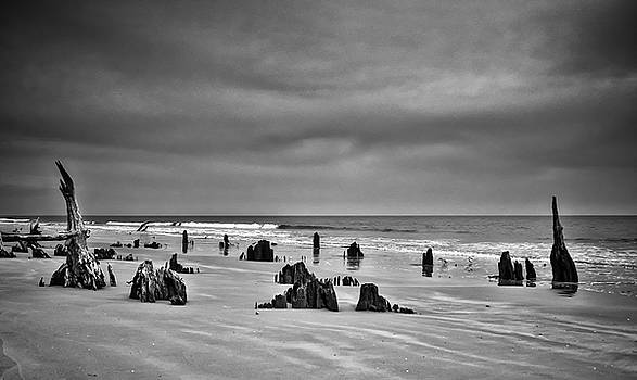 Haunting Hunting Island by Sandy Schepis