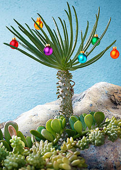 Have a Succulent Christmas by Crista Smyth