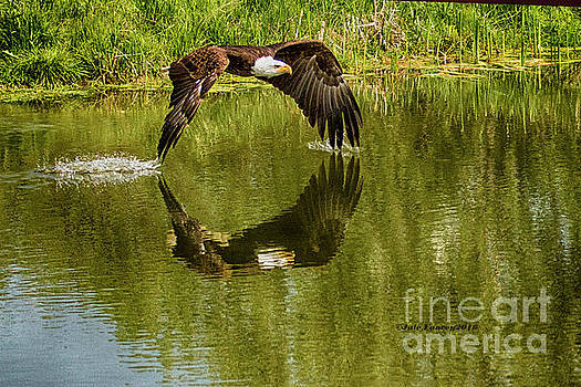 Having a Dip by Jale Fancey