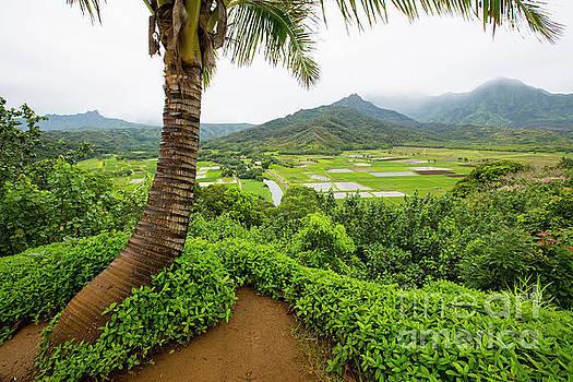Hawaii 7 by Daniel Knighton