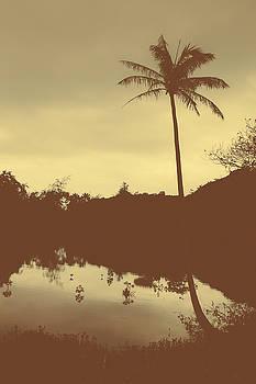 MARVIN JIMENEZ - Hawaii Palm Tree