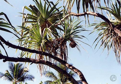 Hawaii Palms  by Helena M Langley