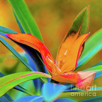 Hawaii Plants and Leaves - Tropical by D Davila