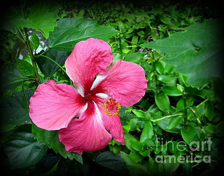 Hawaii State Flower  Hibiscus by Joy Patzner