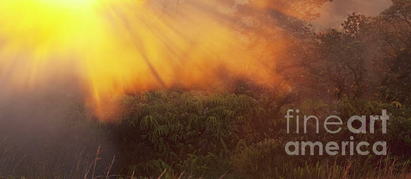 Charmian Vistaunet - Hawaii Steam Vents and Foliage