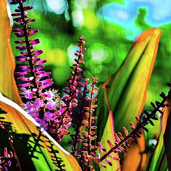 Hawaii Ti Leaf Plant and Flowers by D Davila