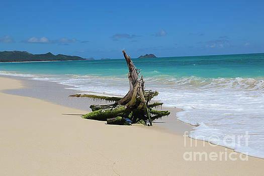 Hawaiian beach by Anthony Jones