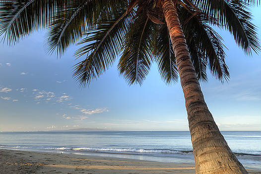 Hawaiian Coconut Palm Sunrise 2 by Dustin K Ryan