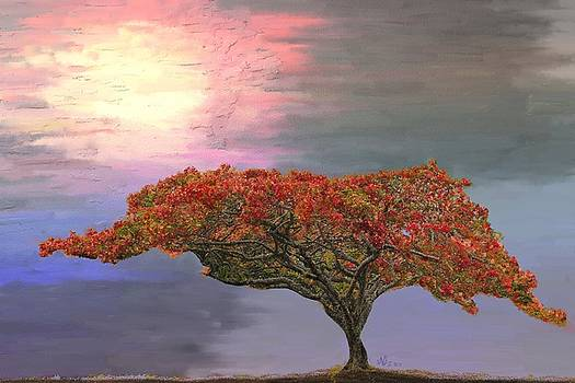 Hawaiian Flame Tree by Angela Stanton