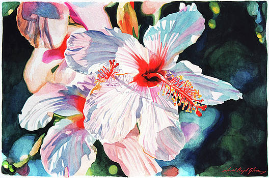 Hawaiian Hibiscus by David Lloyd Glover