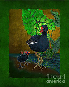 Hawaiian Moorhen or Gallinule by Tammy Yee