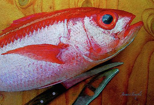 James Temple - Hawaiian Onaga Digital Watercolor