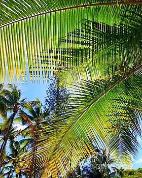Hawaiian Palm by Kristine Merc