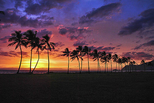 Hawaiian Palm Tree Paradise by Megan Martens