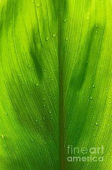 Hawaiian Ti plant by Lehua Pekelo-Stearns