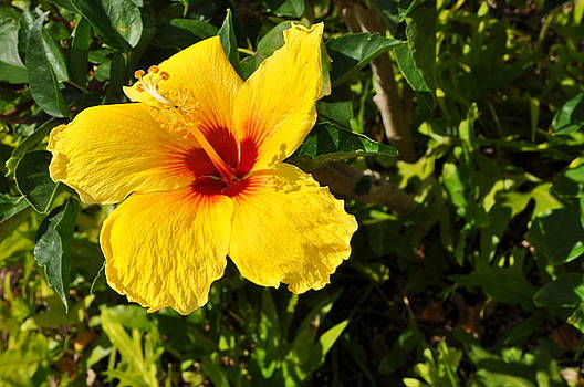 Hawaiian Time by Jill Kelsey