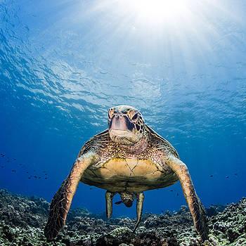 Hawaiian Turtle by J Gregory Sherman